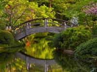 Bridge over water in a Japanese Garden, image credit David Cobb