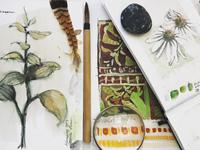 nature sketchbooks, credit Pam Luer