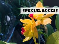 Tropical orchids, photo Frank Meuschke