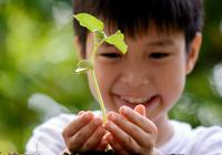 Boy wth Plantmobile Seedling, photo Tinna Pong/Shutterstock