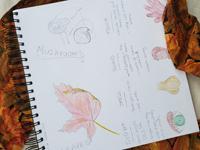 Nature journal, fall leaf theme, Reba Luiken