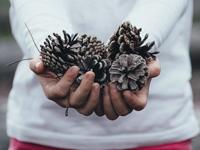 Hands holding assorted twigs and pinecones, photo AnnieSpratt/Unsplash
