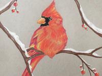 cardinal drawing, by instructor Aryn Lill