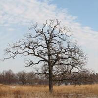 Oak Architecture